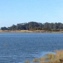 Sunny Lake Shore