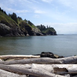 Driftwood Coastline